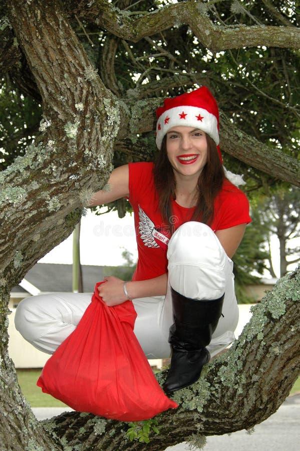 Santa en árbol imagen de archivo