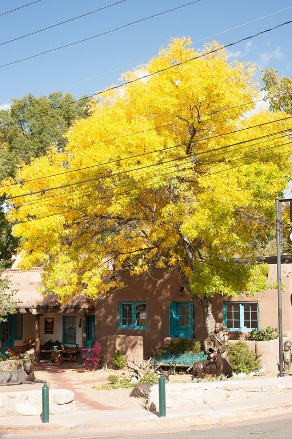 Yellow leaves on tree on Canyon Road, Santa Fe, New Mexico. stock photos