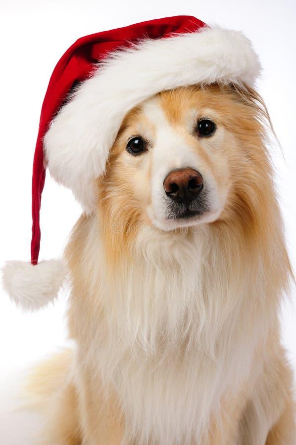 Santa hund arkivfoto