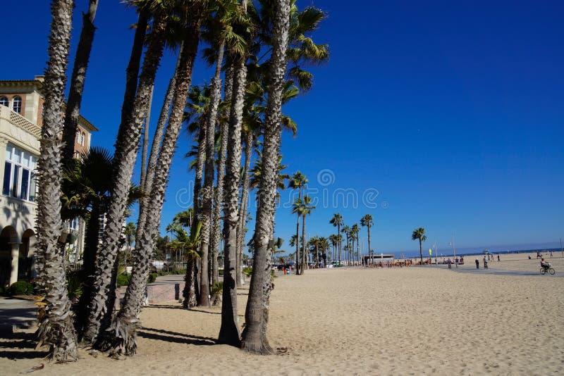 Santa Monica State Beach com palmeiras foto de stock