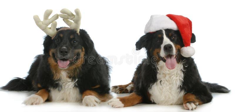 Santa och rudolph hundkapplöpning royaltyfri foto