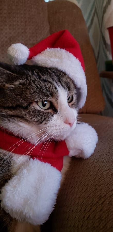 Santa Paws arkivfoto