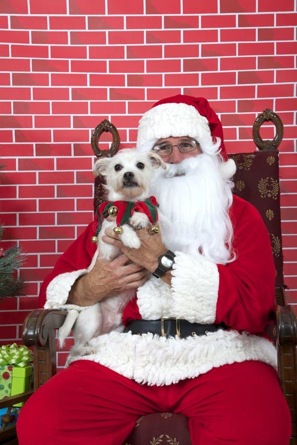 Santa Paws mit einem weißen Hündchen lizenzfreie stockfotos
