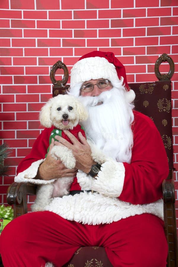 Santa Paws mit weißem Hündchen stockbilder