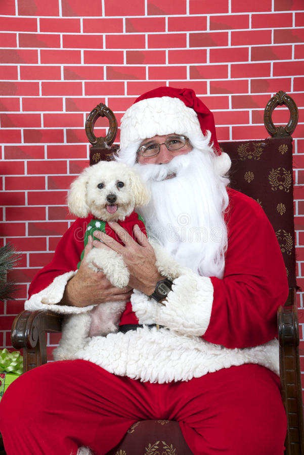 Santa Paws with white puppy dog stock images