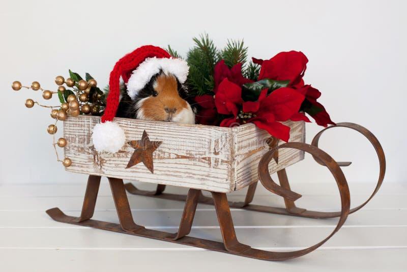 Santa prosiątko