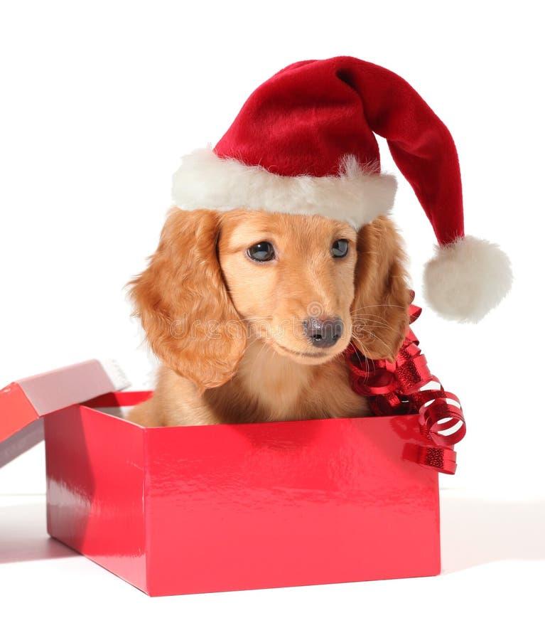 Santa pup stock images