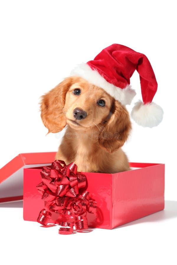 Santa puppy royalty free stock photo
