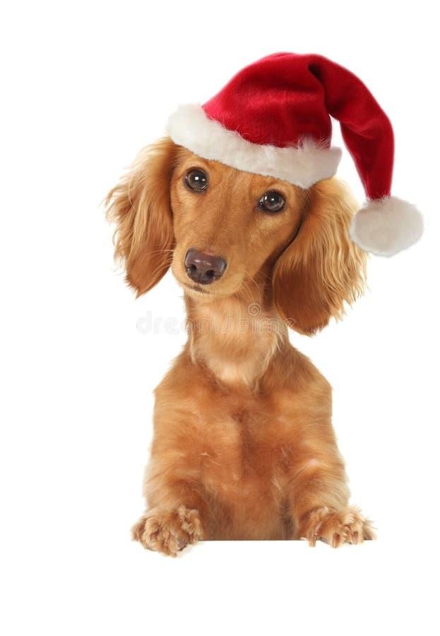 Santa puppy stock photos