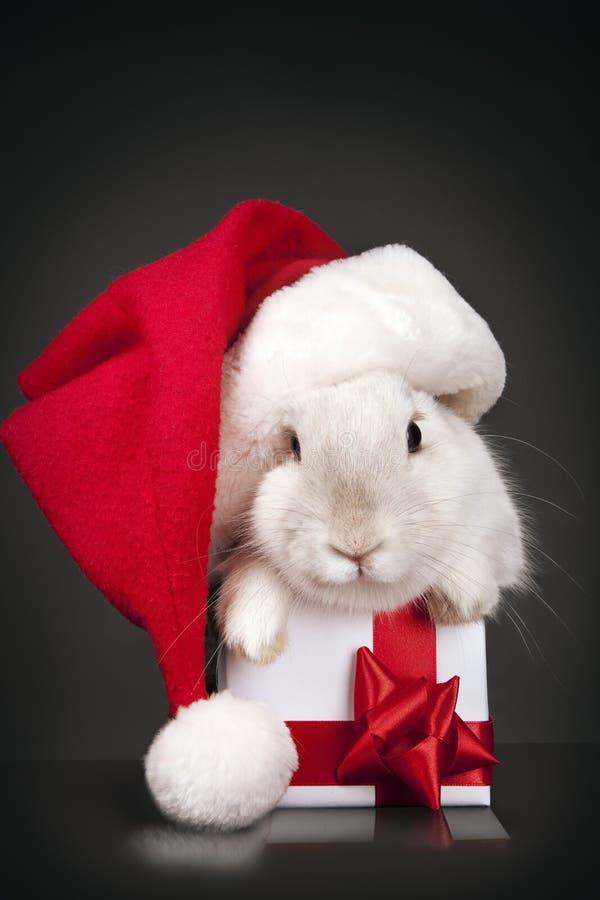 Santa rabbit hat with Christmas box stock image