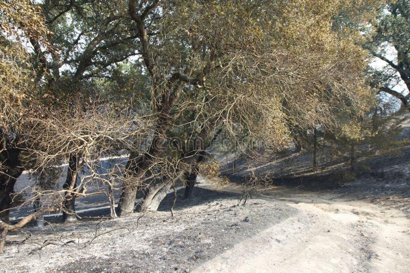 Santa Rosa - Shaloh Rigional parkerar efter brand royaltyfria bilder