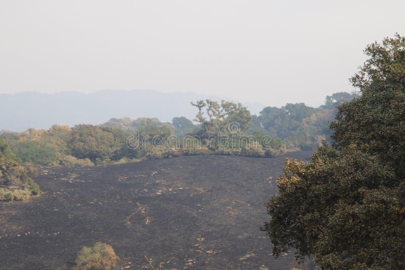 Santa Rosa - Shaloh Rigional parkerar efter brand arkivfoton