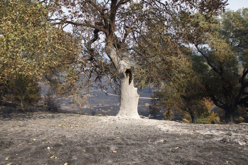 Santa Rosa - Shaloh Rigional parkerar efter brand arkivbilder