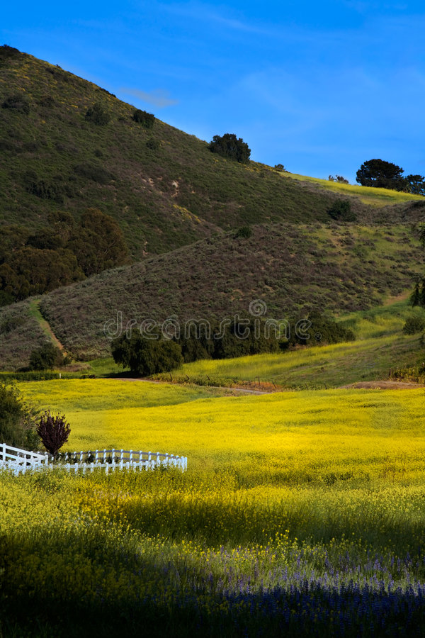 Download Santa Rosa Valley stock image. Image of pasture, nature - 4851977