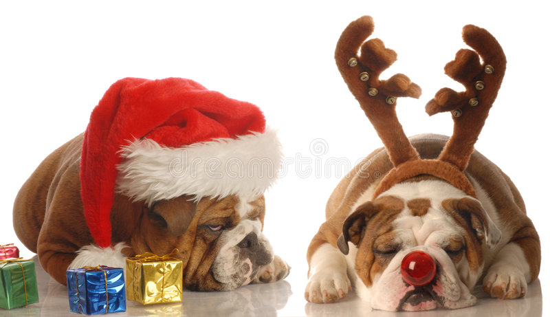 Download Santa and rudolph dogs stock image. Image of pampered - 6944217