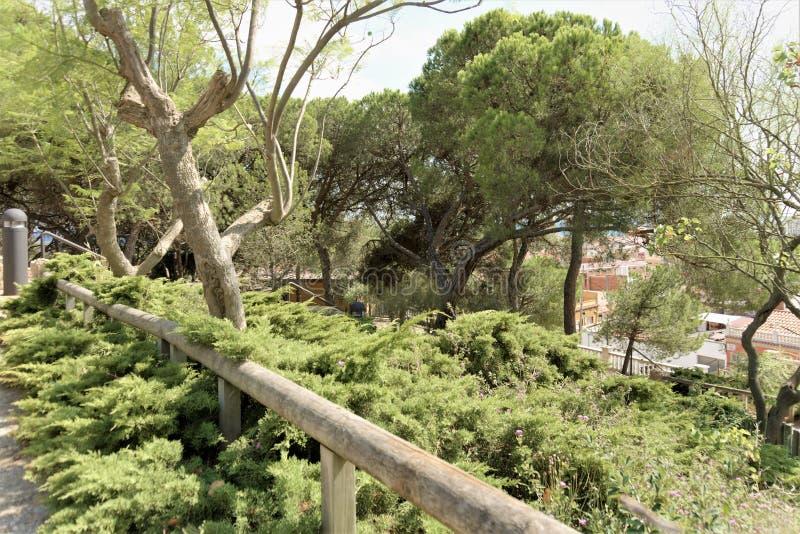 Santa Susanna, Spanje, Augustus 2018 Mooie installaties in het stadspark stock fotografie