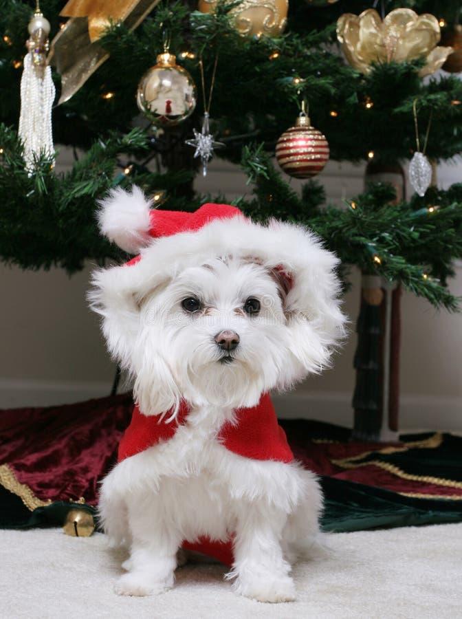 Santa szczeniak zdjęcie royalty free