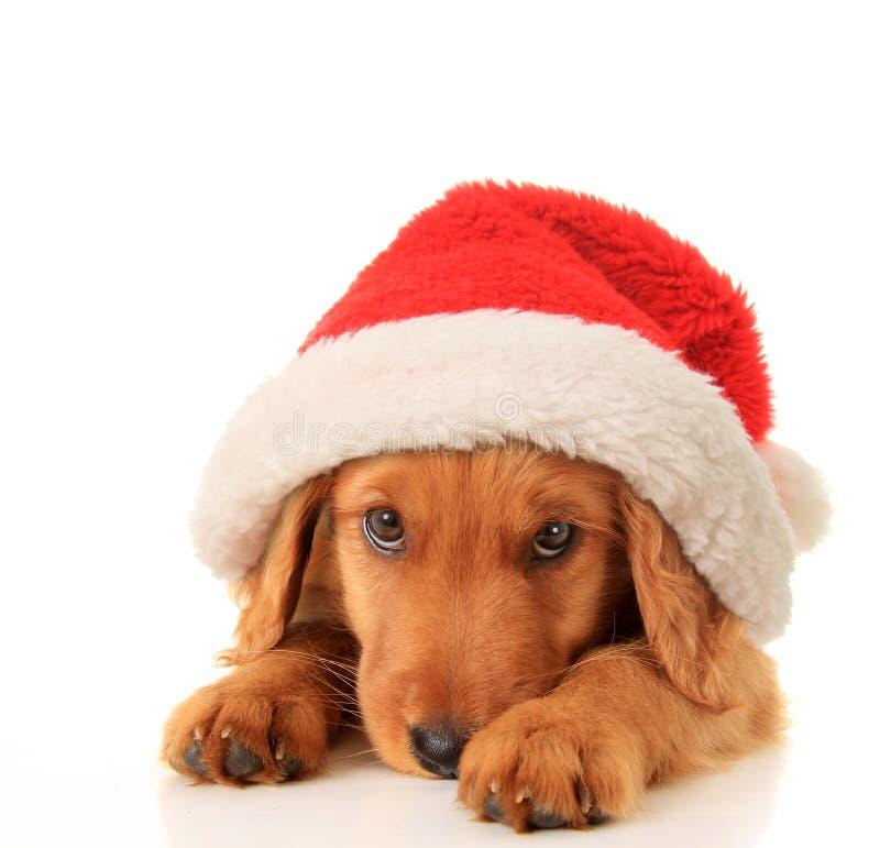 Santa szczeniak zdjęcia royalty free