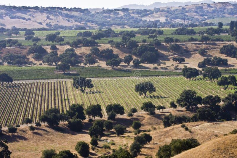 Santa ynez valley vineyards stock image