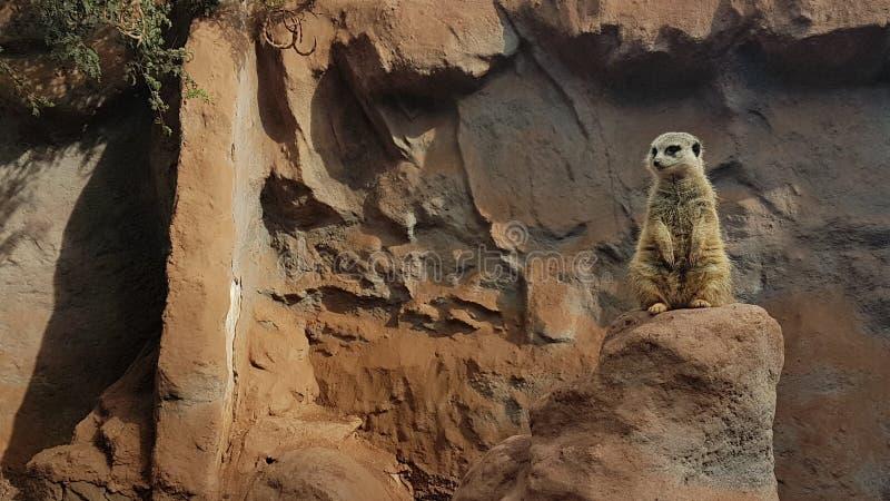 Santiago zoo zwierzę obrazy stock