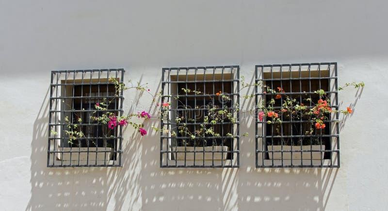 Download Santo domingo стоковое фото. изображение насчитывающей заводы - 41658300