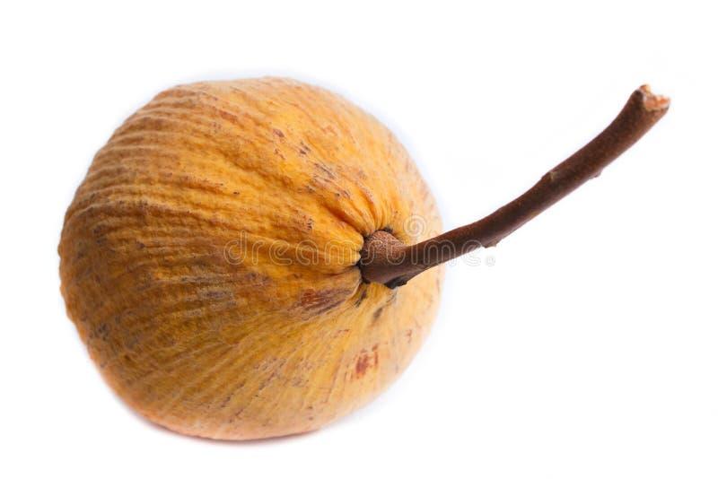 Santol-Frucht lokalisiert auf weißem Hintergrund lizenzfreie stockfotografie