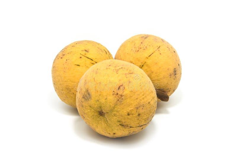 Santol-Frucht lokalisiert auf weißem Hintergrund lizenzfreie stockfotos