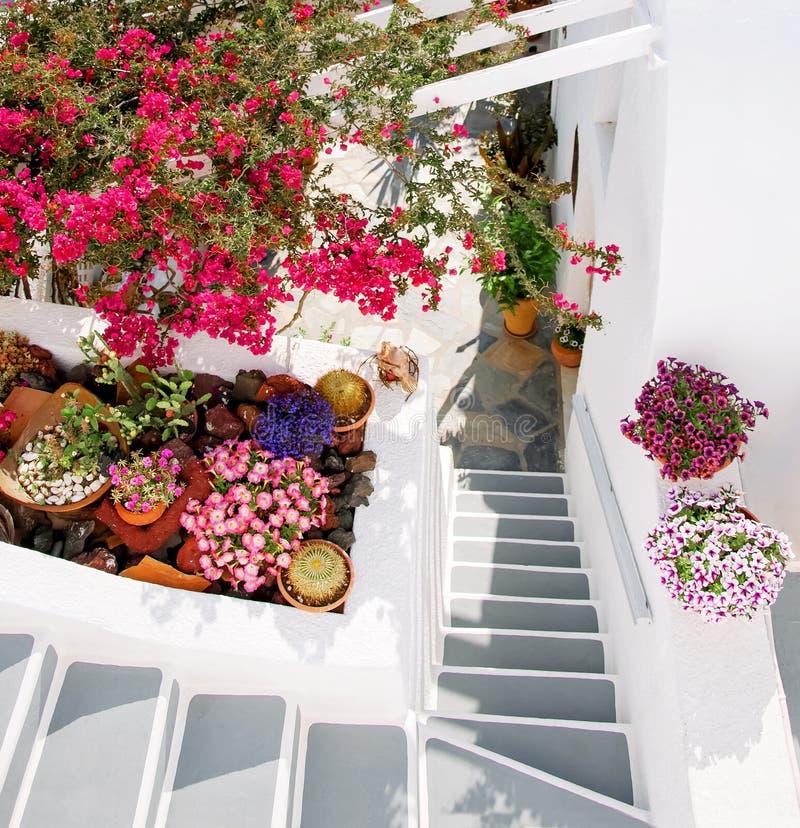 Santorini, Ελλάδα, Ευρώπη Κλασική άσπρη ελληνική αρχιτεκτονική με μια σκάλα, διάφορα όμορφα λουλούδια Οδοί Santorini, στοκ εικόνα