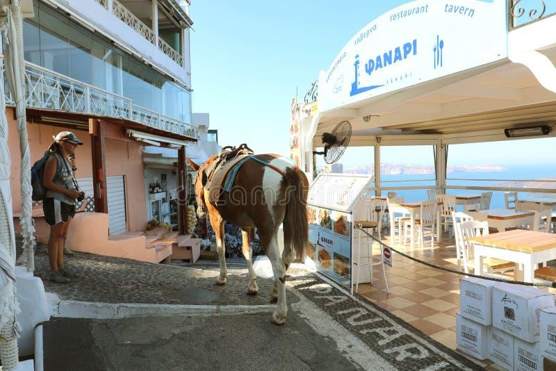 SANTORINI, ΕΛΛΑΔΑ - 19 ΙΟΥΛΊΟΥ 2018: μουλάρια στην οδό σε Santorini στοκ εικόνα με δικαίωμα ελεύθερης χρήσης