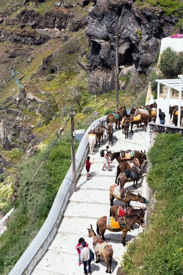 Santorini, Греция, апрель 2019 Лошади и ослы на острове Santorini - традиционном переходе для туристов Животные дальше стоковые изображения