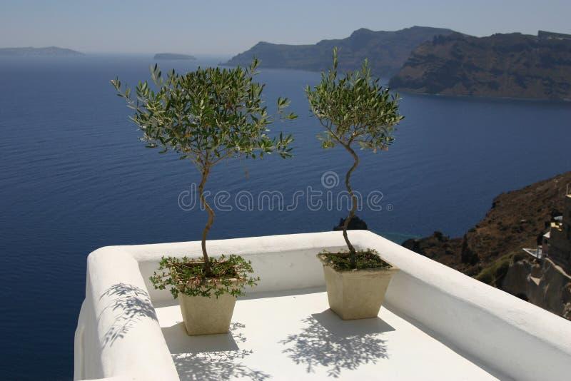 Santorini Baum lizenzfreie stockfotos