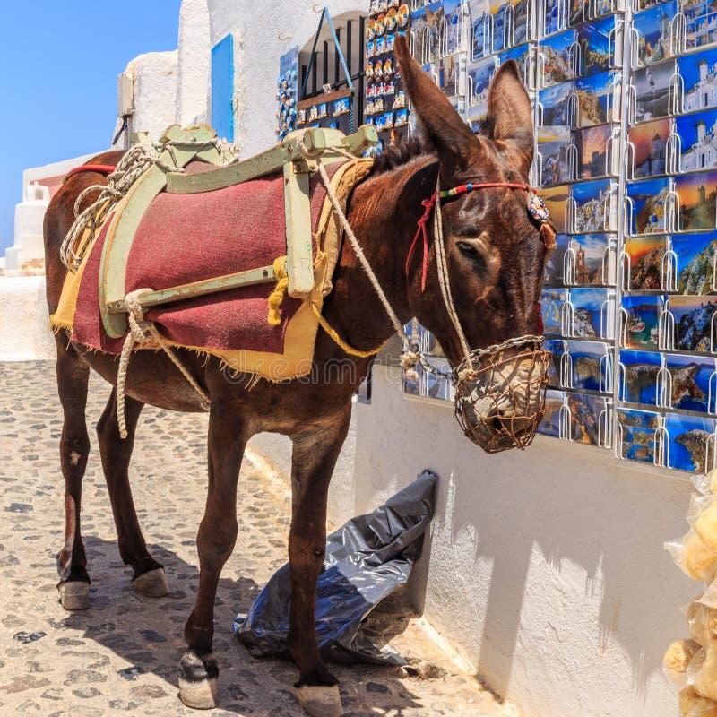 Santorini donkey royalty free stock photos