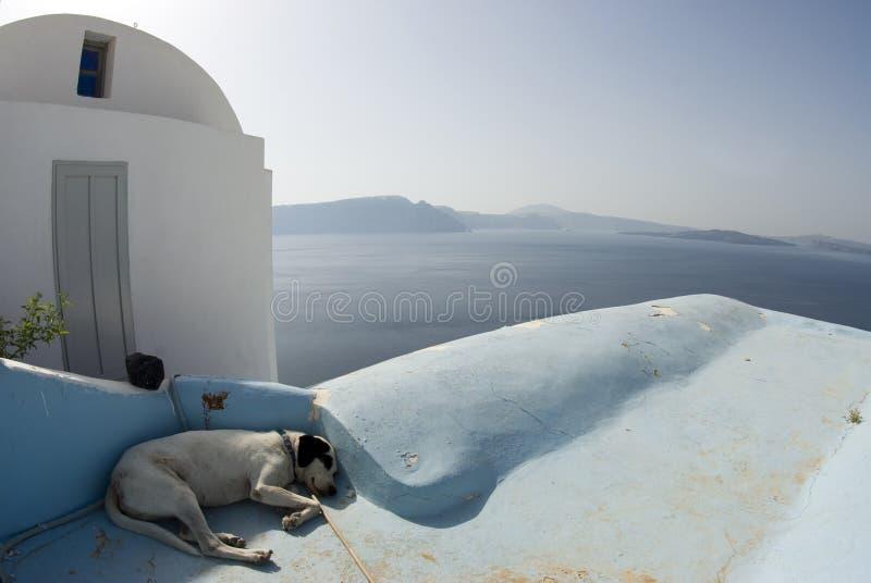 Santorini el dormir del perro foto de archivo libre de regalías