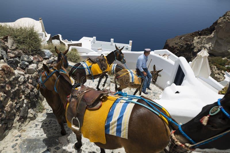 Santorini Esel stockbilder