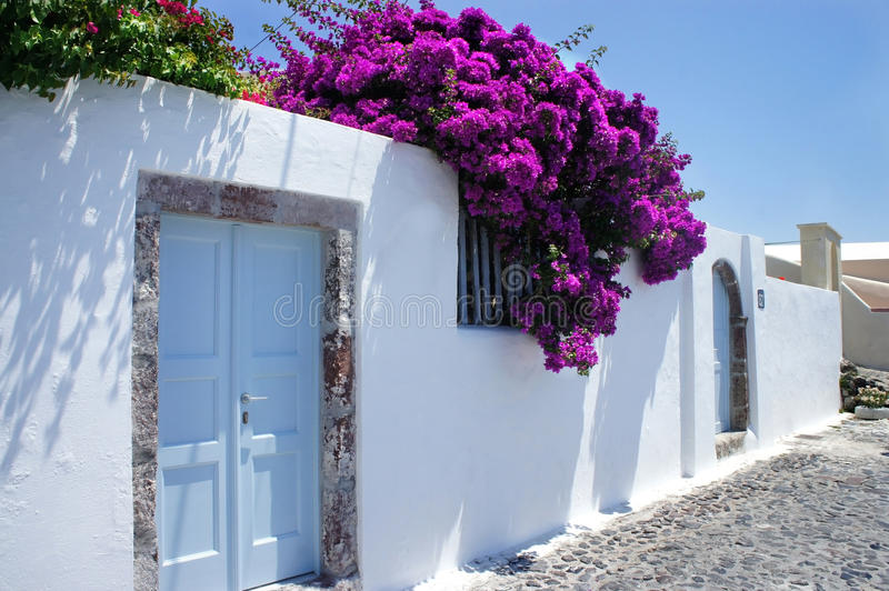 Download Santorini flowers stock photo. Image of aegean, postcard - 25198818
