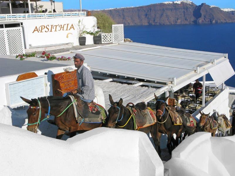 Santorini, Griechenland, Esel, lokaler Transport, griechischer Mann, Meer lizenzfreie stockbilder