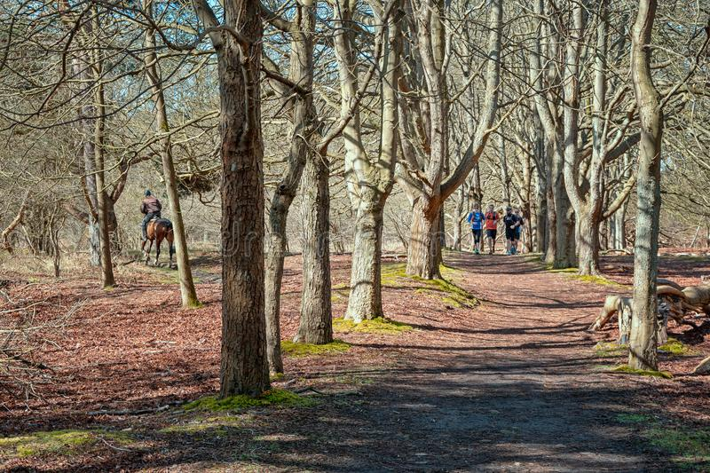 Horse rider and runners active in the park. Santpoort, Netherlands, April 5, 2015: Horse rider and runners active in the park in the seventeenth century Duin & stock photo