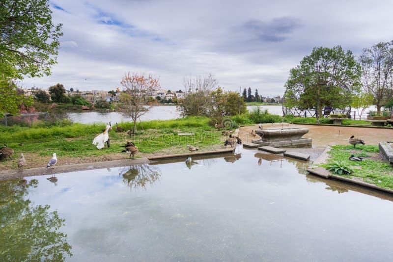 Santuário de animais selvagens de Merritt do lago, Oakland, San Francisco Bay, Califórnia fotos de stock royalty free