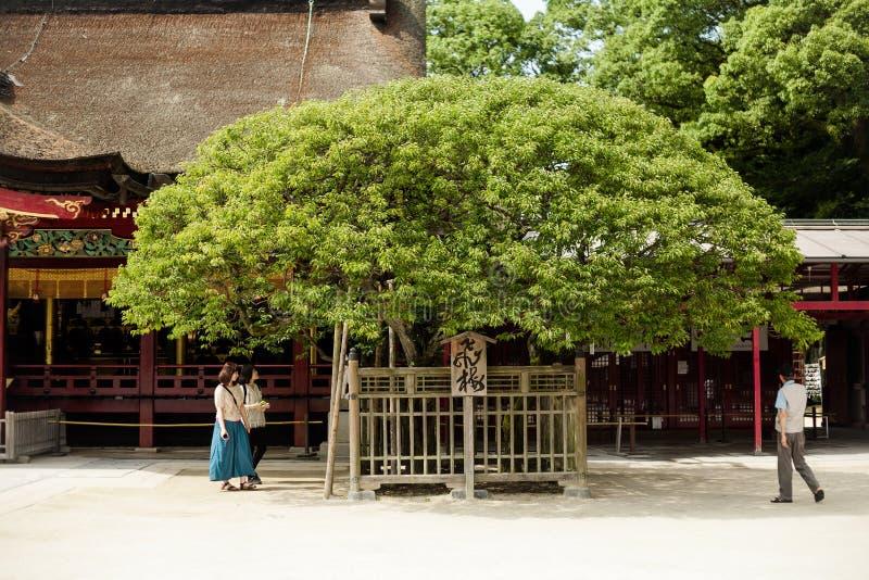 Santuário de Dazaifu Tenmangu fotos de stock royalty free