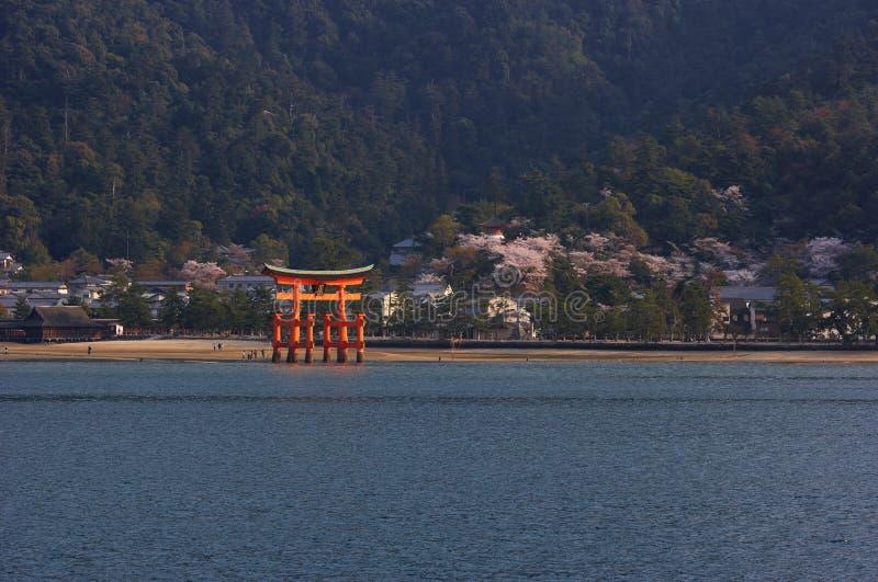 Santuário de Itsukushima com o Torii na flor de cereja fotos de stock