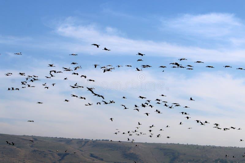 Santuário de pássaro de Hula imagens de stock royalty free