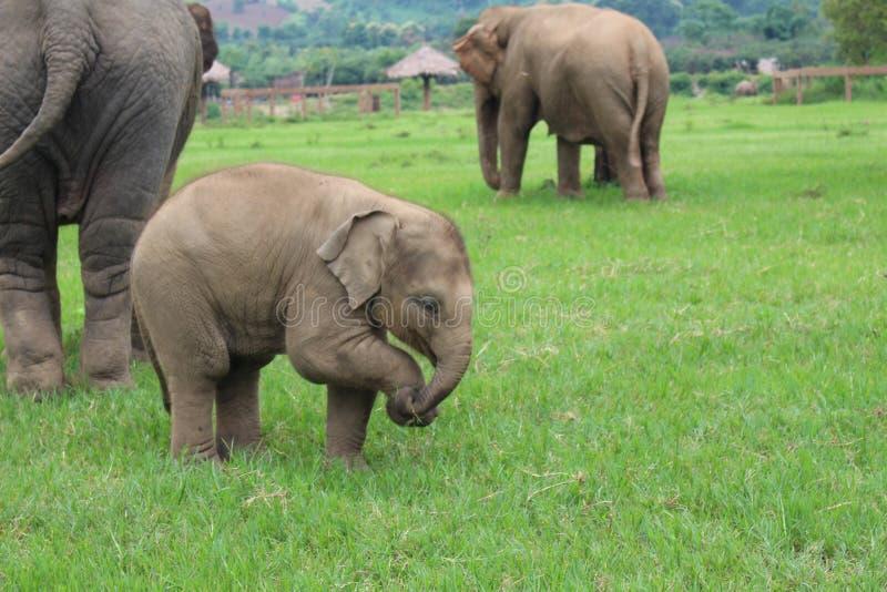 Santuário do elefante foto de stock