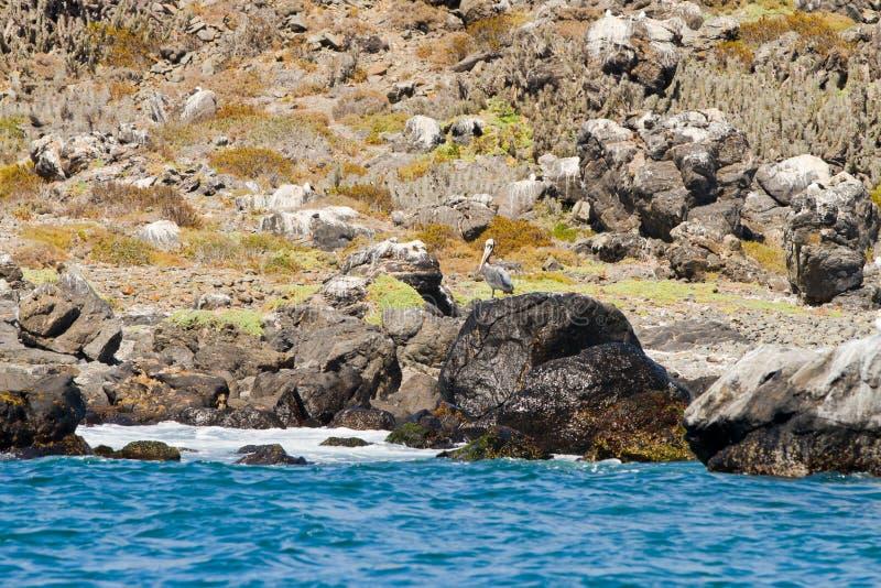 Santuário o Chile da natureza e de animais selvagens fotos de stock royalty free