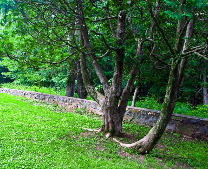 Santuario de la naturaleza de Virginia foto de archivo