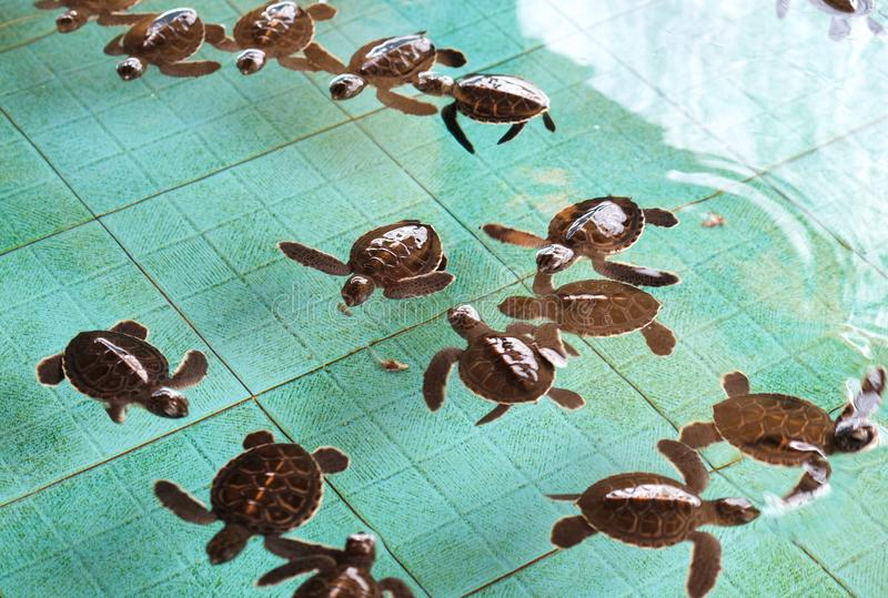 Santuario de la tortuga de mar en la isla de Gili Meno, Indonesia fotografía de archivo