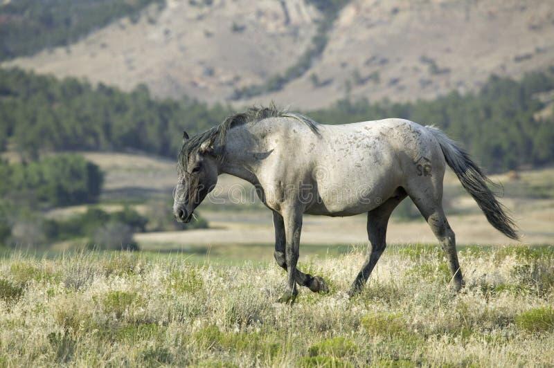 Santuario del caballo salvaje de Black Hills, fotos de archivo libres de regalías