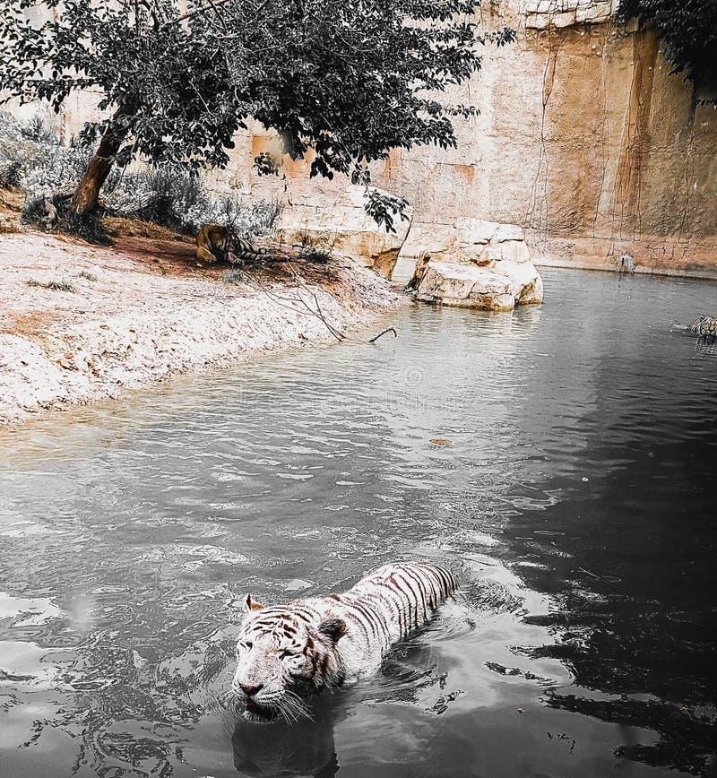 Santuario della tigre fotografia stock