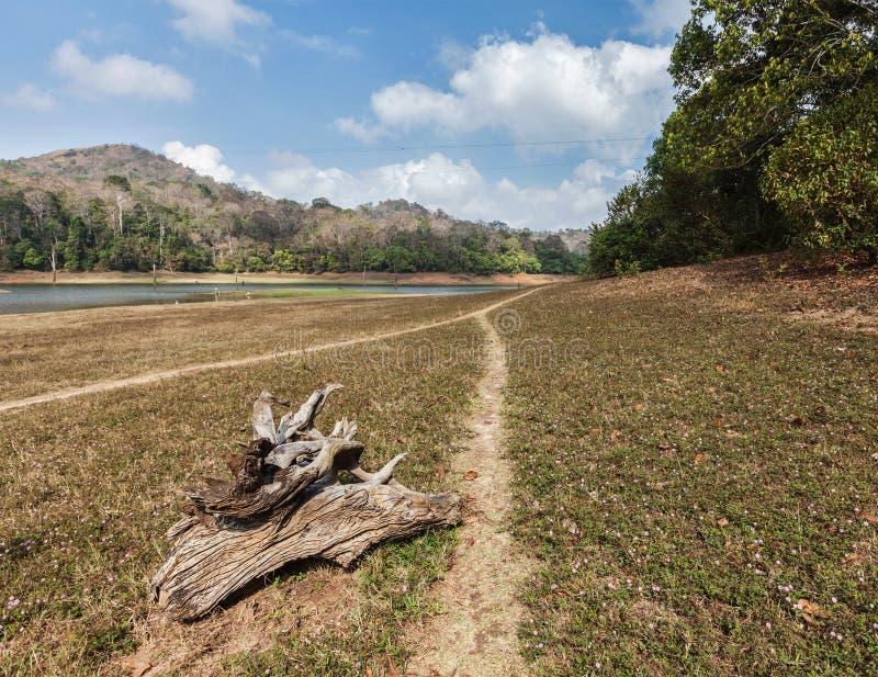 Santuario di fauna selvatica di Periyar, India immagini stock