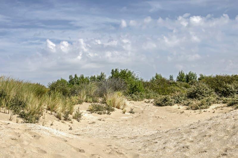 Sany holoow in de duinen stock fotografie