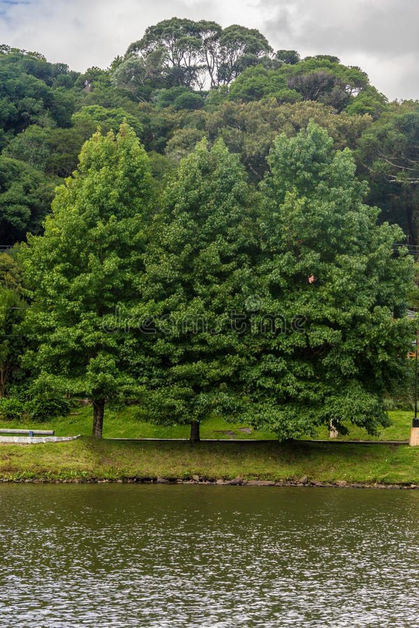 Sao Bernardo lake. Trees around Sao Bernardo lake, Sao Francisco de Paula, Rio Grande do Sul, Brazil stock photography